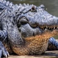 Крокодил дракон морское чудовище